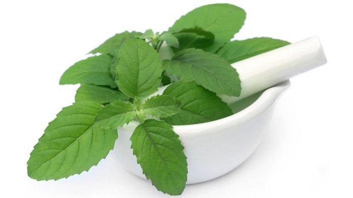 Resep ramuan obat kuat pria tahan lama diatas ranjang dengan daun kemangi